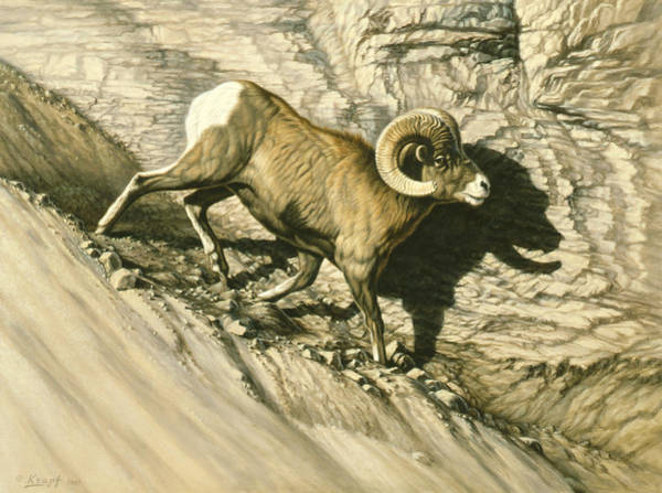 Ram Painting - Along The Wall-bighorn Ram by Paul Krapf