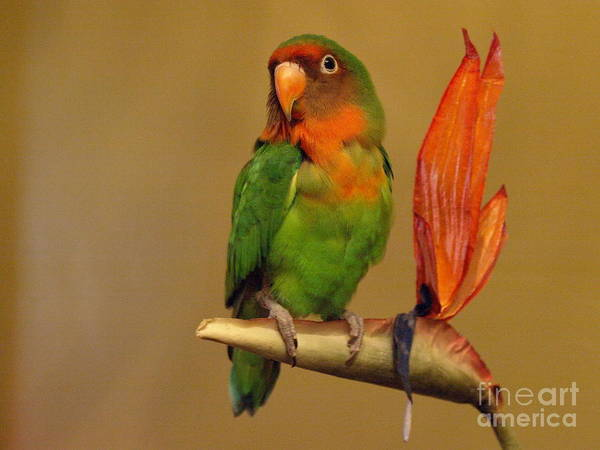 Photograph - Alonso On The Bird Of Paradise by Jeffrey Peterson
