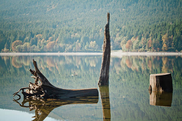 Alouette Wall Art - Photograph - Alouette Lake Forestry by Christopher Kimmel