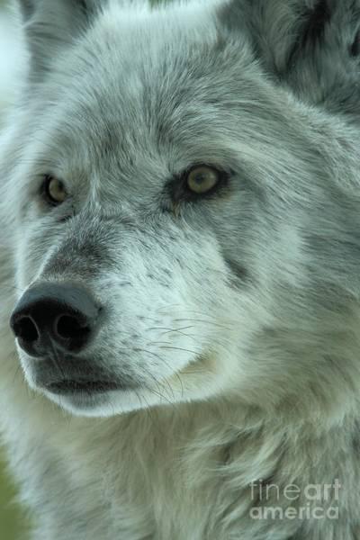 Photograph - Alpha Girl Closeup by Adam Jewell