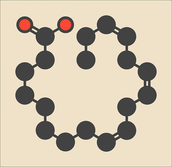 Omega Photograph - Alpha-linolenic Acid Molecule by Molekuul