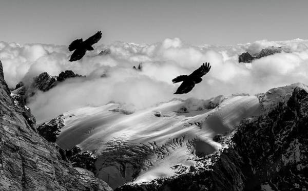 Wall Art - Photograph - Alpine Choughs And Snow-covered Alps by K Jayaram/science Photo Library