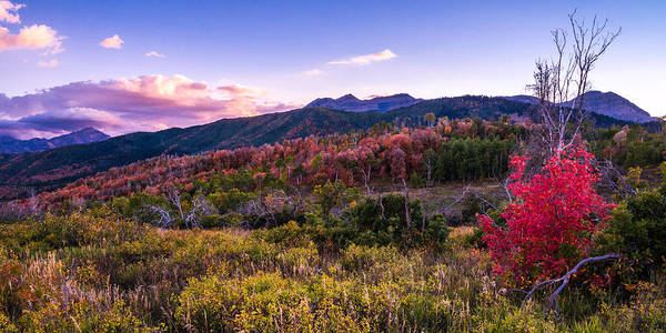 Shrubs Photograph - Alpine Fall by Chad Dutson