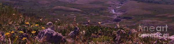 Alpine Floral Meadow Art Print