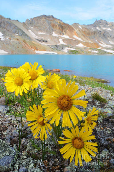 Photograph - Alpine Flowers by Kate Avery