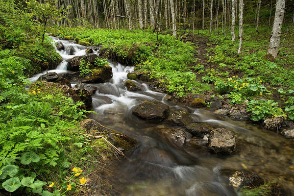 Chamonix Wall Art - Photograph - Alpine Forest And Stream In Spring by Duncan Shaw