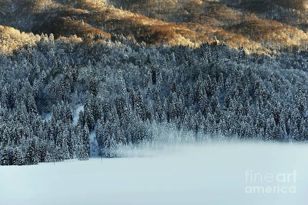 Wall Art - Photograph - Alpine Forest by Yuri San