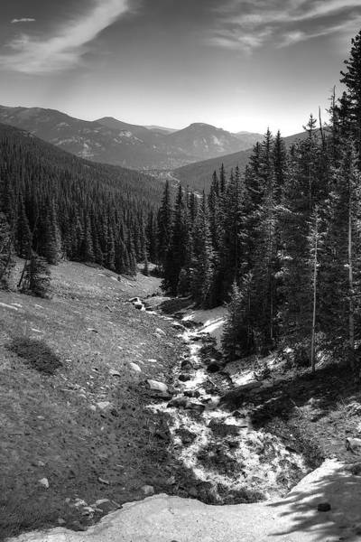 Wall Art - Photograph - Alpine Glade by William Wetmore