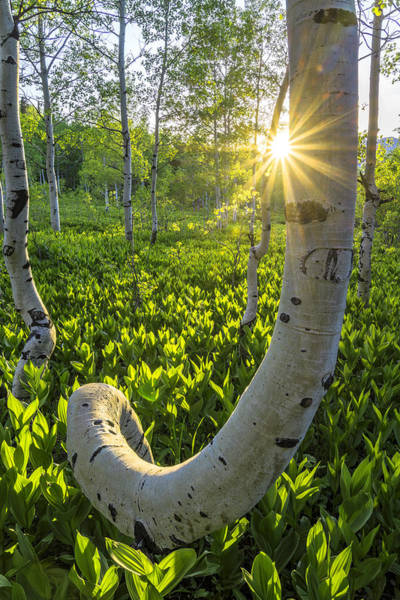 Photograph - Alpine Grass by Dustin  LeFevre