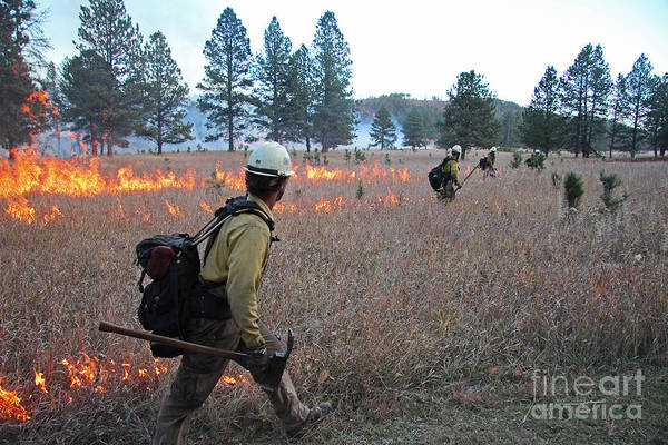 Alpine Hotshots Ignite Norbeck Prescribed Fire Art Print