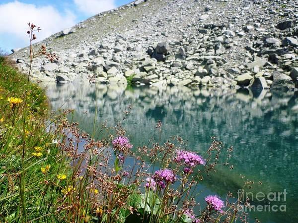 Alpine Lake And Flora Art Print