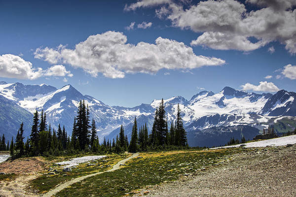 Wall Art - Photograph - Alpine Path by Aaron Bedell
