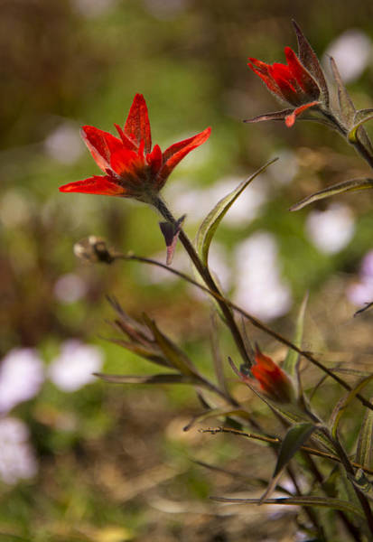 Wall Art - Photograph - Alpine Red by Aaron Bedell