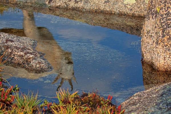 Photograph - Alpine Reflection by Jim Garrison