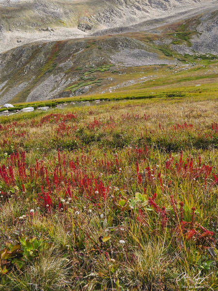Photograph - Alpine Wildflowers 6 by Aaron Spong