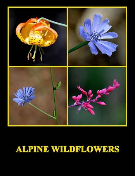 Photograph - Alpine Wildflowers by AJ  Schibig