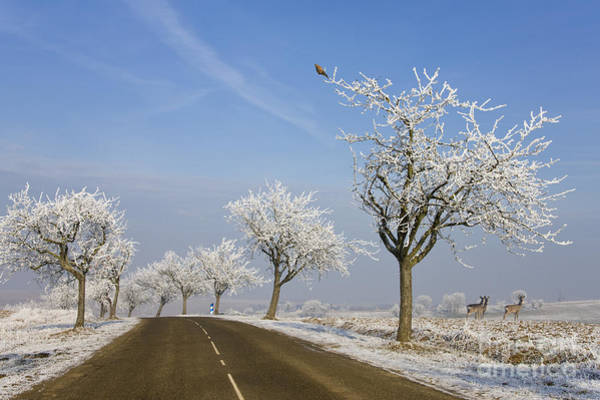 Photograph - Alsace France In Winter by Jean-Louis Klein and Marie-Luce Hubert