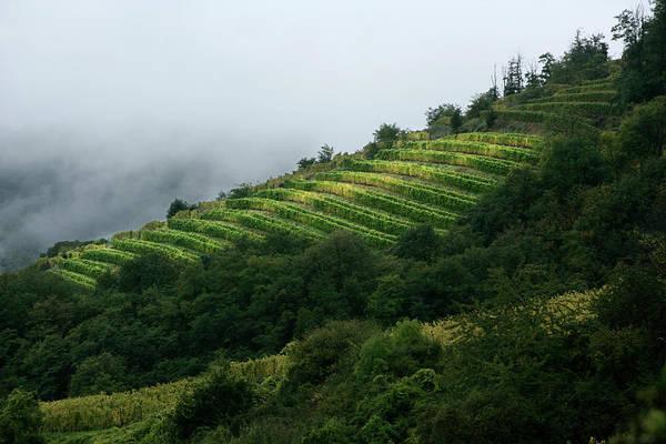 Alsace Wall Art - Photograph - Alsace Landscape, Kaysersberg, France by Clay McLachlan