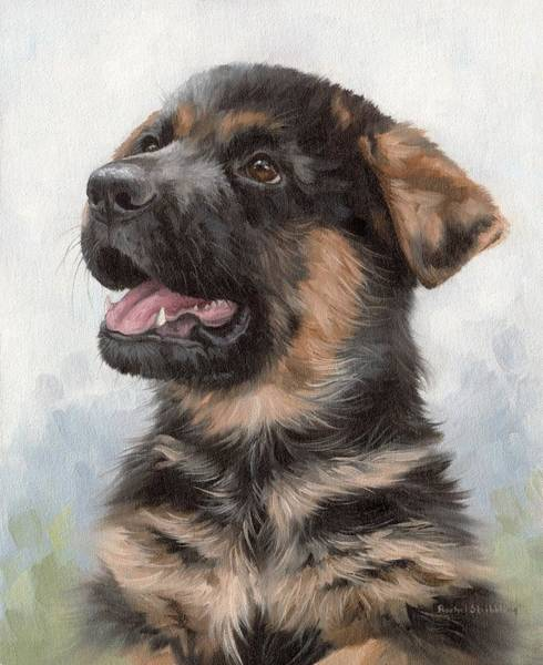 Looking Up Painting - Alsatian Puppy Painting by Rachel Stribbling