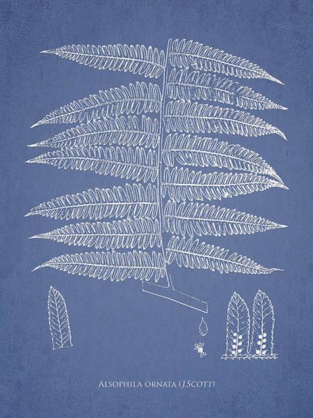 Ferns Digital Art - Alsophila Ornata by Aged Pixel