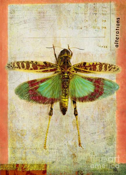 Grasshopper Photograph - Alterations by Elena Nosyreva