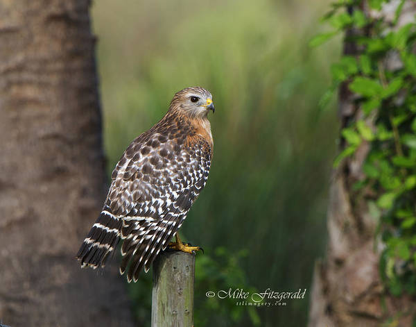 Photograph - Always Watchful by Mike Fitzgerald