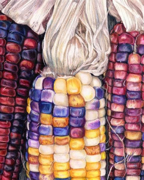 Indian Corn Drawing - aMAIZEd by Shana Rowe Jackson