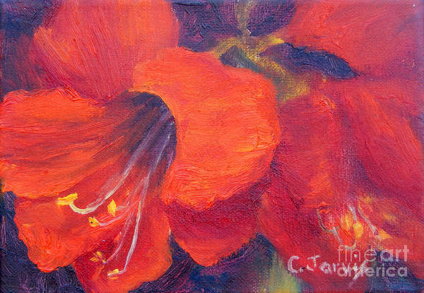Painting - Amaryllis Flower by Carolyn Jarvis