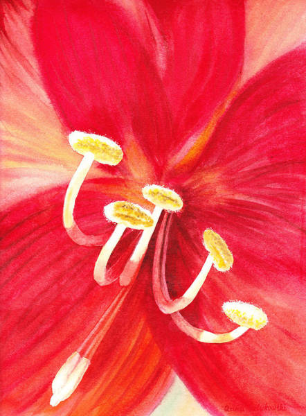 Wall Art - Painting - Amaryllis Flower by Irina Sztukowski