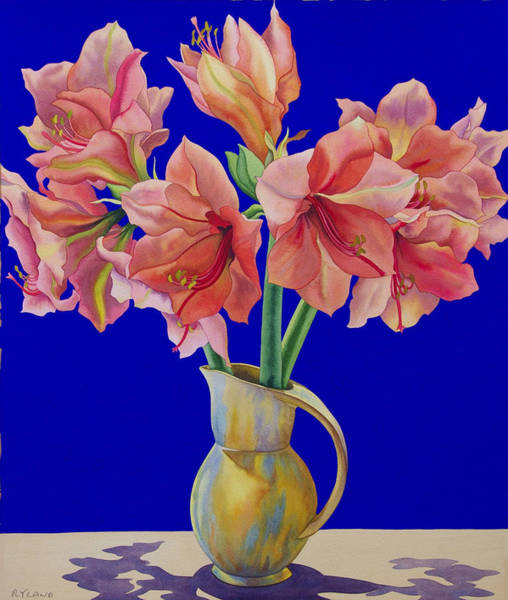 Amaryllis Painting - Amaryllis In A Jug by Christopher Ryland