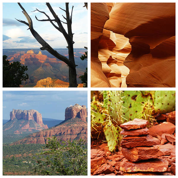 Photograph - Amazing Arizona Beauty by Toby McGuire
