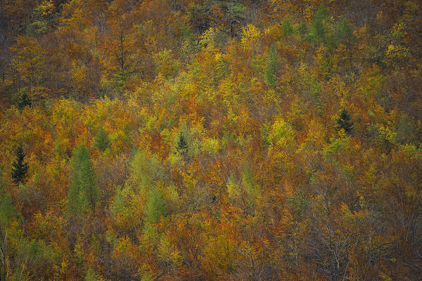 Photograph - Amazing Autumn Colors by Ivan Slosar