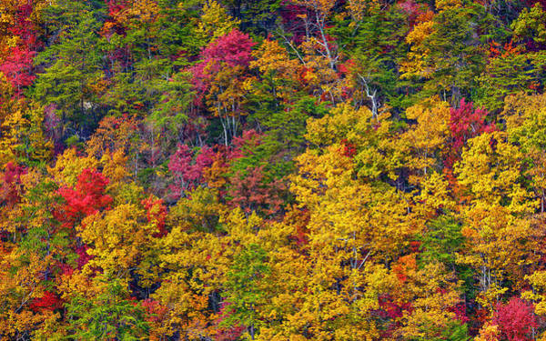 Cloudland Canyon Photograph - Amazing Cloudland In The Fall by John M Bailey