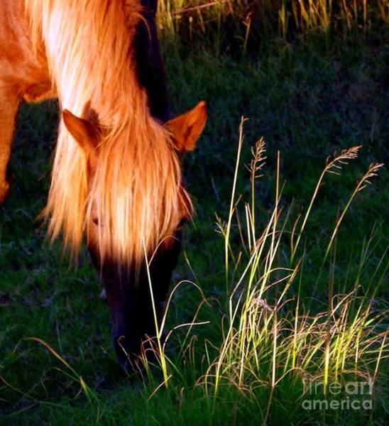 Sienna Photograph - Amazing Graze by Janine Riley