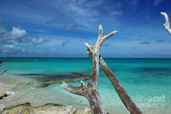 Painting - Wishing Bone Beach Scene by Robyn Saunders