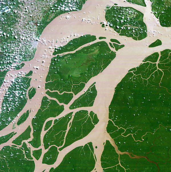 River Delta Photograph - Amazon Delta by Planetobserver