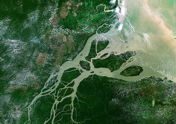 River Delta Photograph - Amazon Delta by Planetobserver/science Photo Library