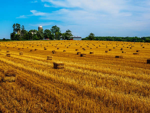 Photograph - Amber Fields Of Grain by Louis Dallara