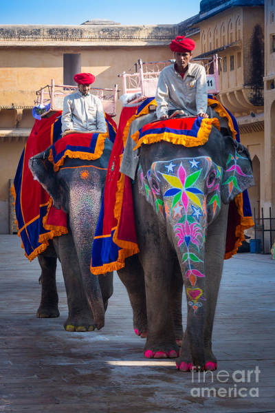 Amber Photograph - Amber Fort Elephants by Inge Johnsson
