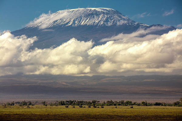 Amboseli Wall Art - Photograph - Amboseli National Park, Kenya by Art Wolfe