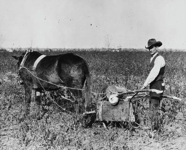 Wall Art - Photograph - America Farming, C1920 by Granger