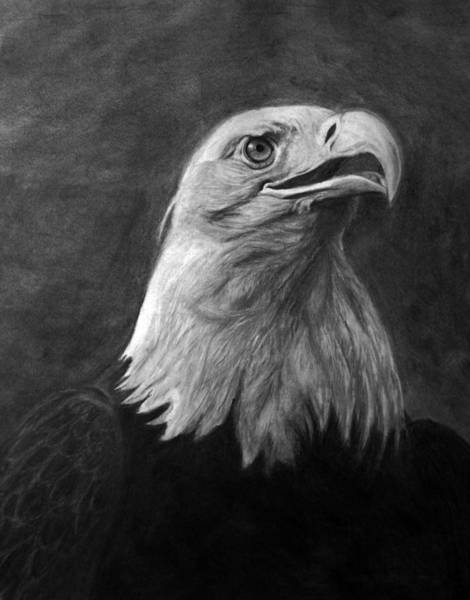 Bald Eagles Drawing - American Bald Eagle by Bev Newcomer