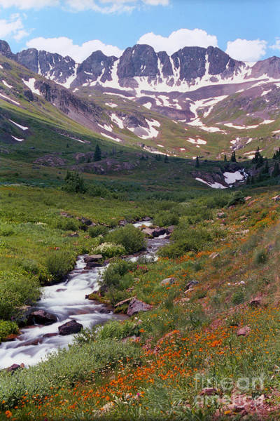 Photograph - American Basin Wildflowers by Teri Brown