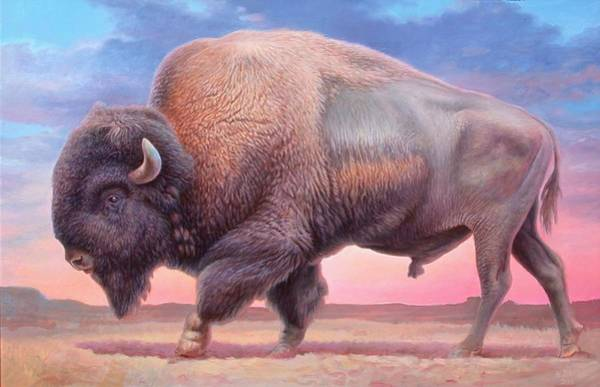 Hans Droog Wall Art - Painting - American Buffalo by Hans Droog