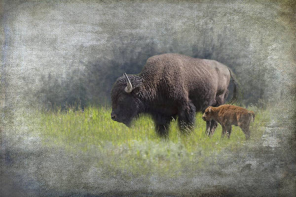 Photograph - American Buffalo Mother And Calf by Randall Nyhof