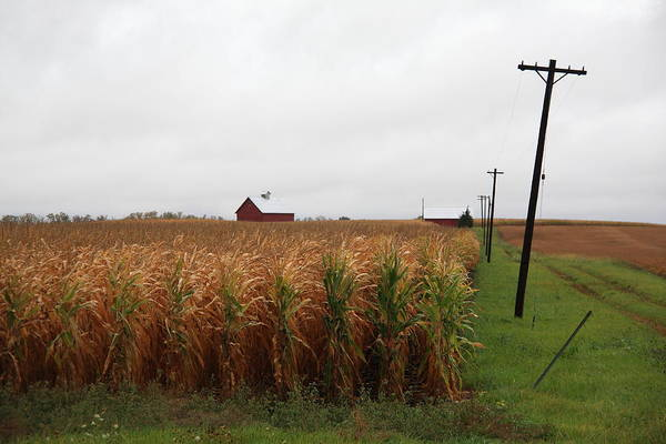 Photograph - American Cornfield And Farmhouse by Frank Romeo