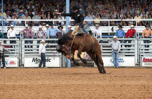 Prca Wall Art - Photograph - American Cowboy Riding Bucking Rodeo Bronc I by Sally Rockefeller