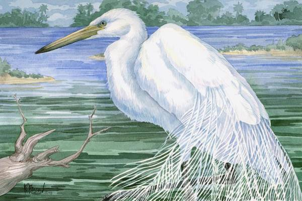 Wading Birds Wall Art - Painting - American Egret by Paul Brent