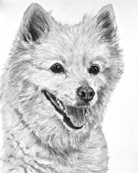 Art Print featuring the drawing American Eskimo Charcoal Drawing by Kate Sumners