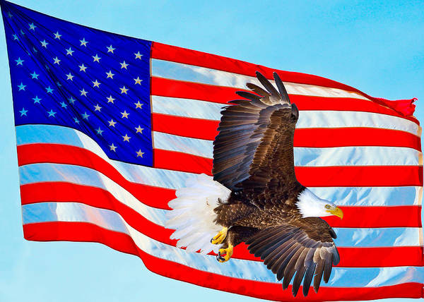Photograph - American Flag With Bald Eagle by Greg Norrell